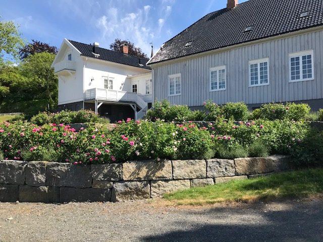 Tollerodden Hus og roser